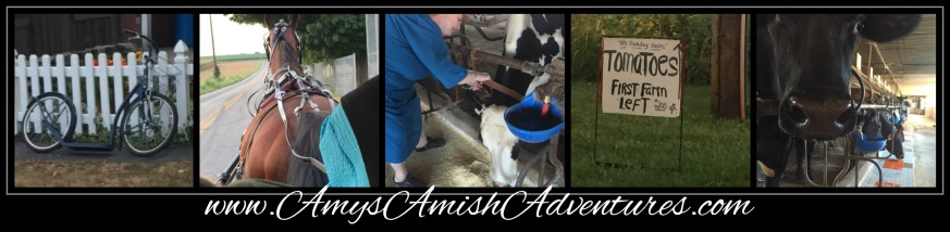 amish collage icon